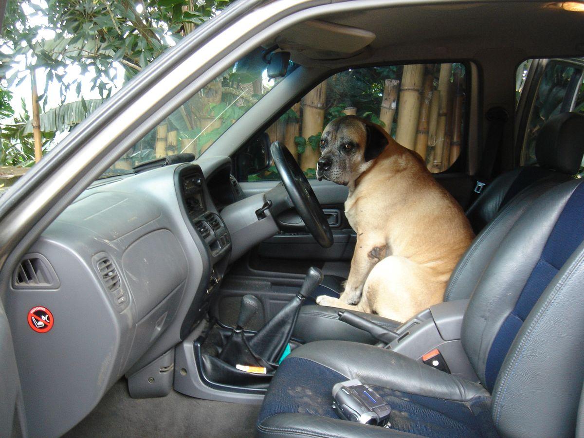 voodoo drives car